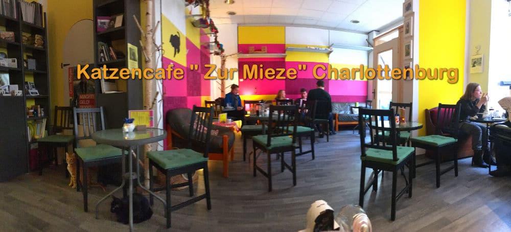 Katzencafe Zur Mieze Berlin Charlottenburg