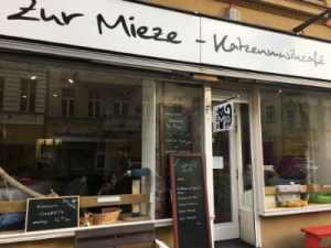 Foto Katzencafe Charlottenburg