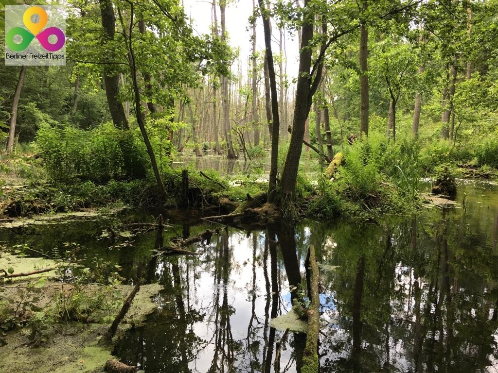 Wanderweg Briesetal in Birkenwerder