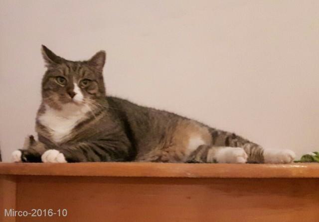 Februar 2017 Tipps Zur Katzenfütterung Diabetes Bei