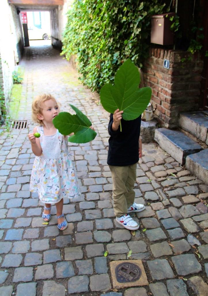 Großes Staunen über Feigenblätter