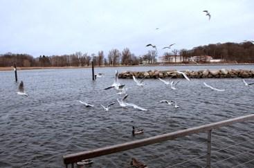Wasser und Wasservögel: Mehr braucht es nicht zum Glück auf Rügen