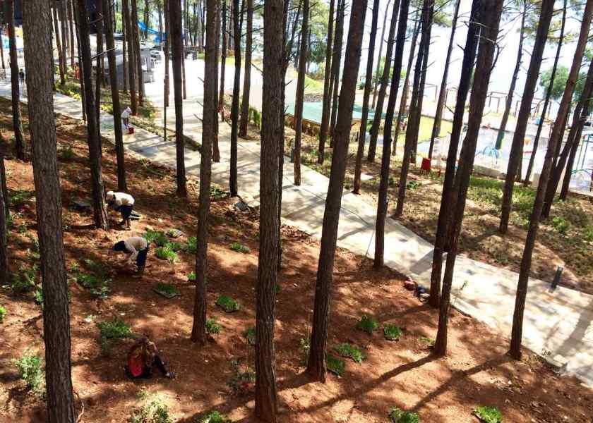 Unermüdlich wird die Hotelanlage des Sentido Orkan Lotus Beach bepflanzt.