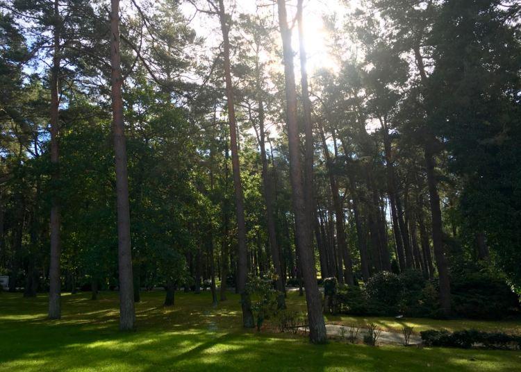 Dünenwald auf dem Hotelgelände des Hotels Fischland in Dierhagen