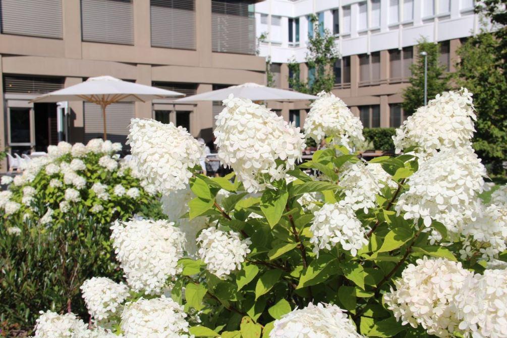Blick auf die Terrasse des Motel One München-City-Süd: Frühstücken im Grünen