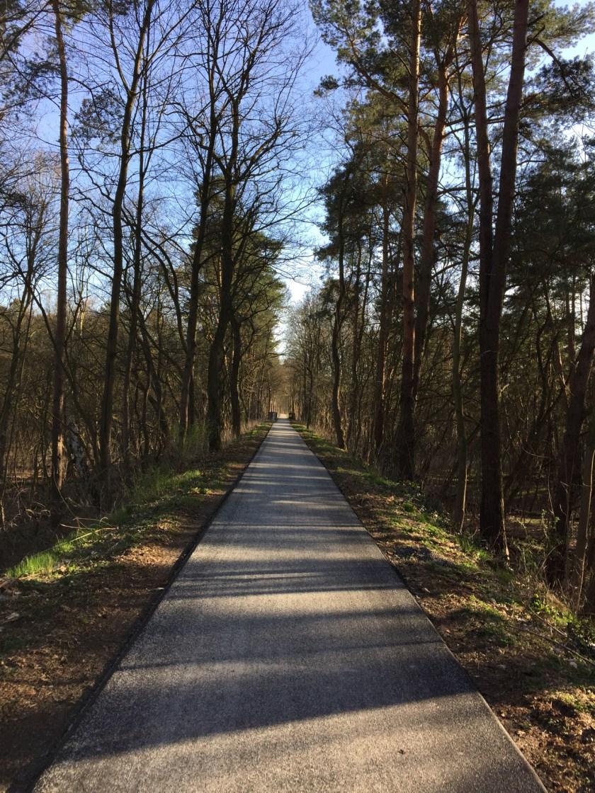 Ein neuer, glatter Radweg. Leider noch nicht überall rund um den Scharmützelsee.
