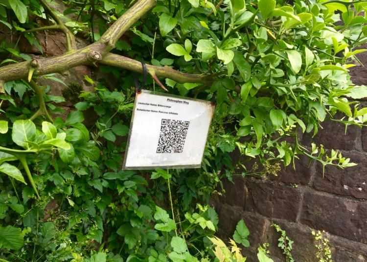 Nicht nur der Blick in die Weite lohnt im Philosophengarten: Wer will, kann noch einiges über die Bäume hier lernen.