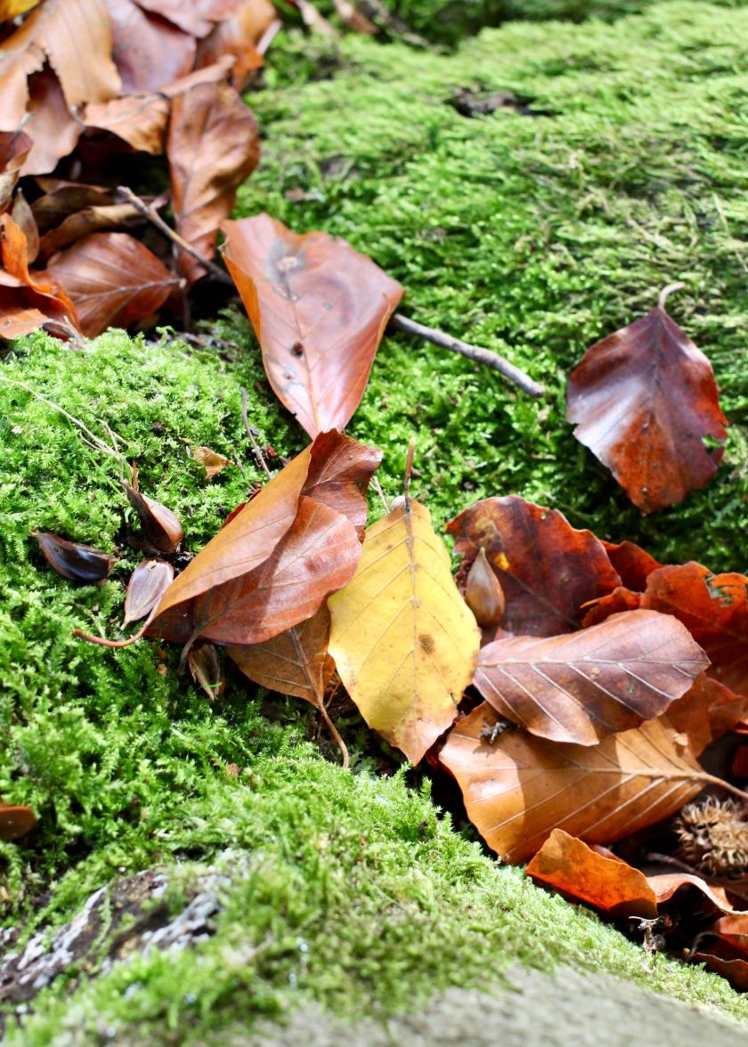Blätter im Moos. Wunderbare Herbstfarben!