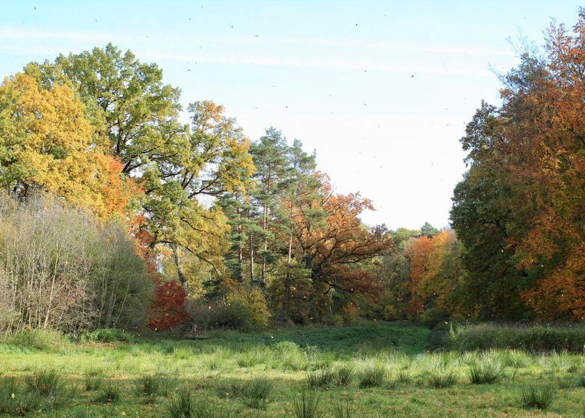 Bunter Herbstwald in Brandenburg.
