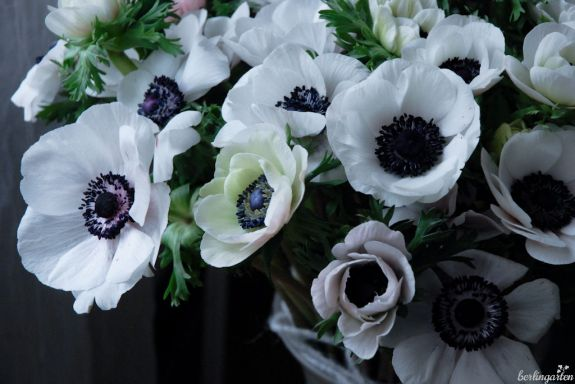 Traumhaft schöne Anemonen: da dürfen es auch etwas mehr sein für die Vase