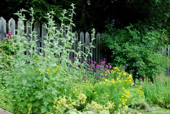 Kräuter sind auch wunderhübsche Zierpflanzen