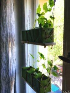 Aussaaten Fenster