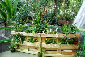 Auswahl Orchideen