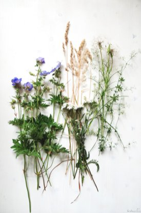 Zutaten Wiesenblumen