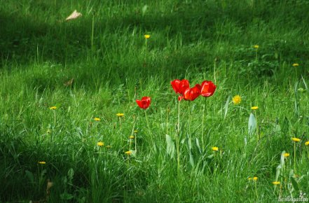 Bunter Rasen