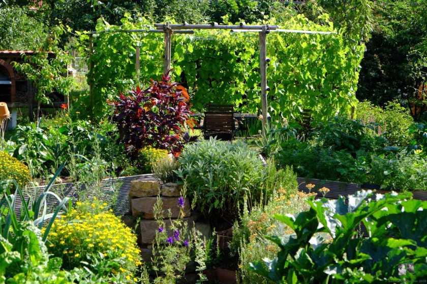 Schmückend und essbar - so ist vieles bei Sabine im Garten