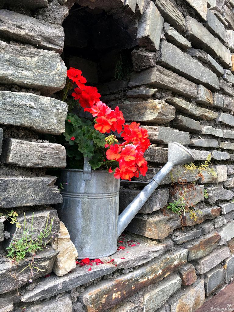 Dekorationsobjekt Pelargonie - der Phantasie sind keine Grenzen gesetzt