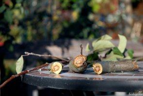 Auch dickere Zweige schneiden sich mühelos
