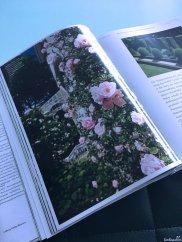Rosen und Formschnitt wie in England