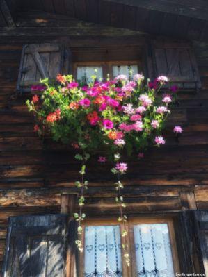 Blumengeschmückte Fenster