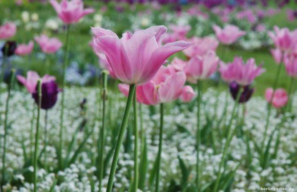 Frühlingsbeete in pastell