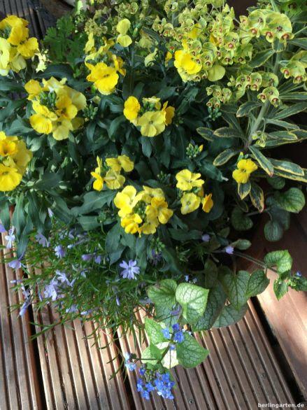 Gelb und himmelblau