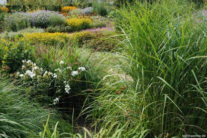 Gelb-Lila Pflanzungen