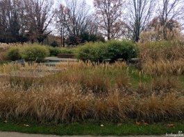 Wenn du noch keine Gräser und/oder Bambus im Garten hast: Es ist nie zu spät für gute Ideen!