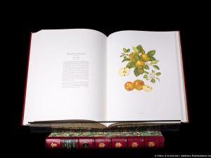 Highgrove Florilegium Malus