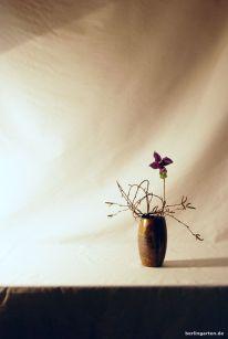 Ikebana mit Staudenclematis