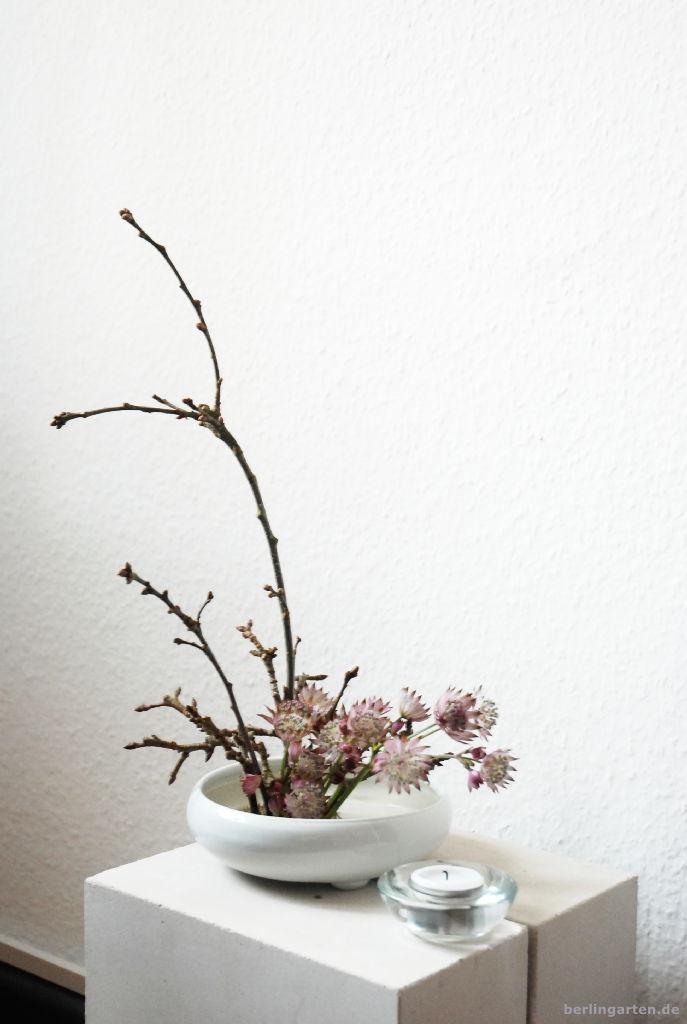 Ikebana mit Sterndolbe zu Hause