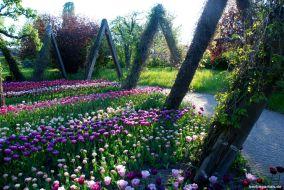 Im Britzer Garten kannst du dir die schönsten Tulpen zum Nachpflanzen in deinem Garten aussuchen