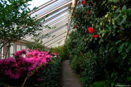 Kamelien und Rhododendren im Kamelienhaus