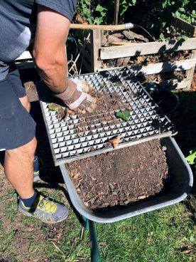 Damit er feinkrümelig ist, sieben wir den Kompost mit einem alten Kellergitter