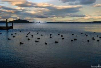 Lake Rotorua im Abendlicht - Wasser ist das bestimmende Element Neuseelands: durch den Pazifik und die unzähligen Seen