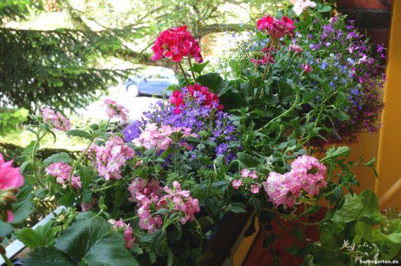 Loggia bepflanzt