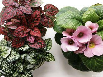 Minipflanzen