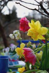 Narzisse Tulpen Ostern