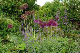 Nepeta und Allium