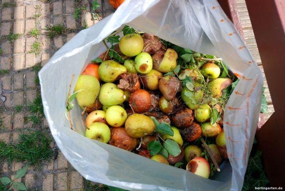Obst mit Monilia Fruchtwelke
