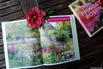 Pfingstrosen als Hauptakteure eines Gartenschauspiels