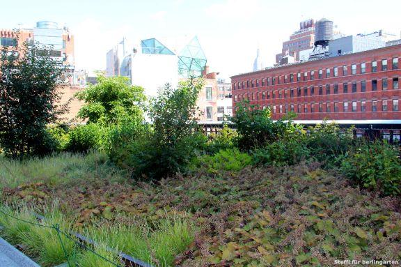 Oudolf Stil: ein Flächenteppich aus Gräsern und Bodendeckern im Hintergrund Stauden und Gehölze