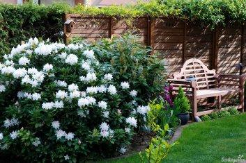 Rhododendron und Bank im Lutyens Style