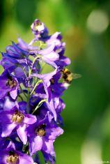 Wertvolle Insektenpflanze