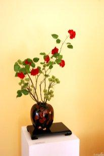 Rose Samenstand Kaiserkrone