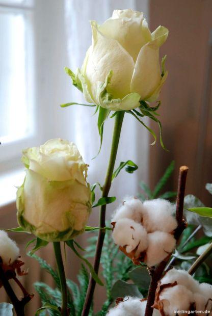 Rosen und Baumwolle als winterlicher Schmuck