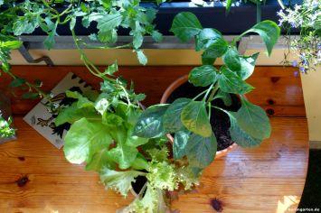 Salat Gemüse