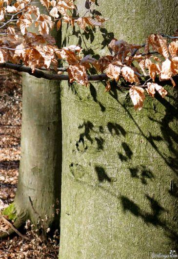 Schatten Blätter
