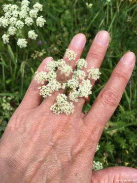 Schmucke Blumenwiesen