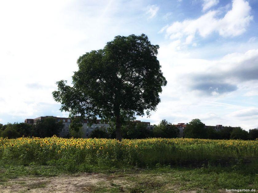 Sonnenblumen sind zwar schön, aber hier waren intakte Gärten und Artenvielfalt